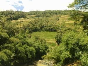 View persawahan sekitar Curug Nangga (rizkichuk.blogspot.com)